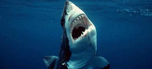shark-attack-660